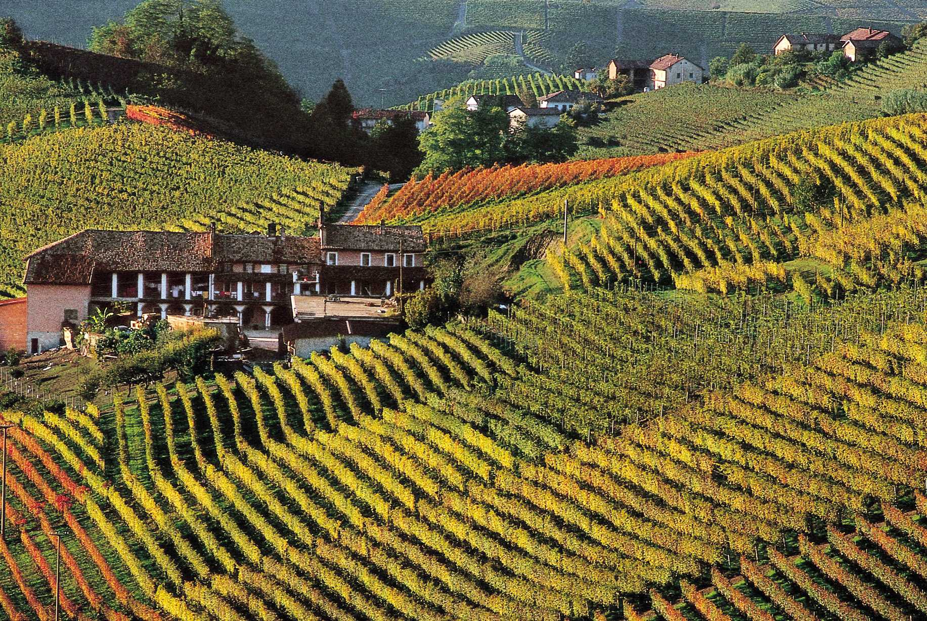 The wine of Piedmont